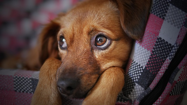 Smelly Ears May Be a Sign Your Dog Has an Ear Infection